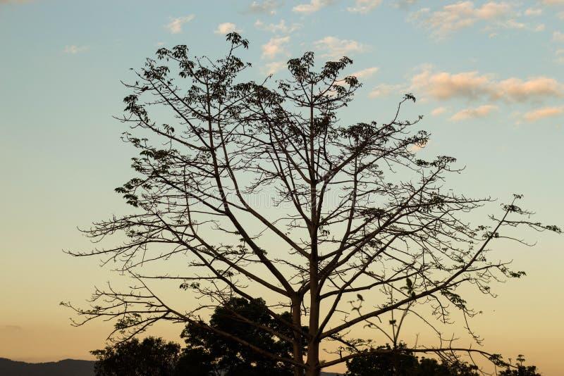 Avondboom stock afbeeldingen