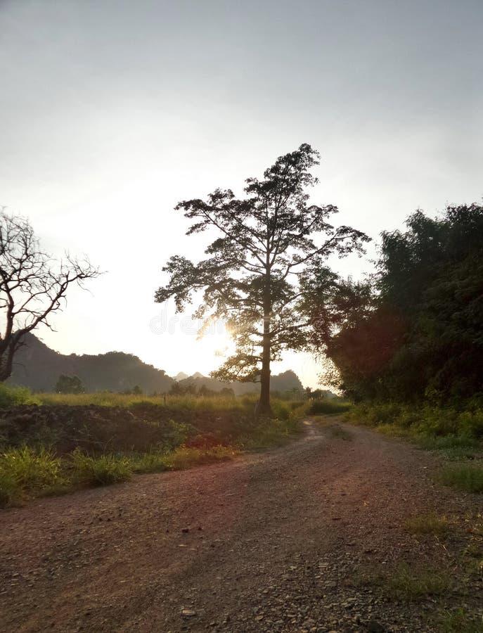Avondlicht bij de kleine landweg door groen padieveld stock afbeeldingen