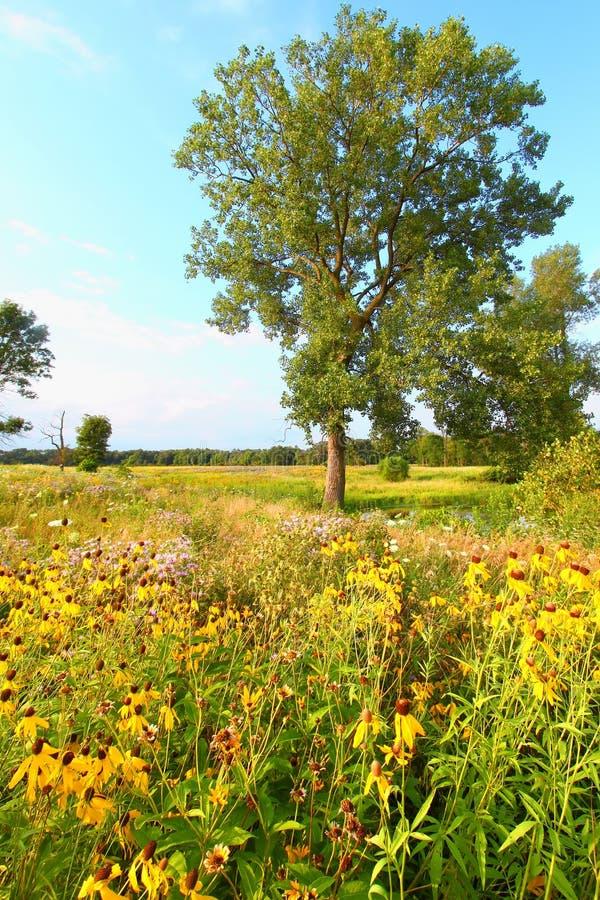 Avondprairie in Illinois royalty-vrije stock fotografie