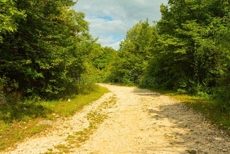 Avonturen bosweg stock fotografie