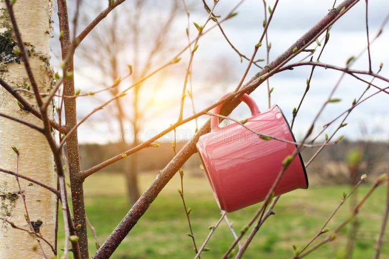 Avonturen in de wildernis De reismok hangt op boomtak in de lente zonnige dag, royalty-vrije stock foto