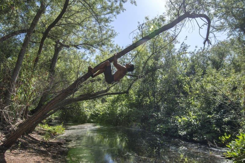 Avonturenmens die boom zoals een aap beklimmen royalty-vrije stock afbeelding