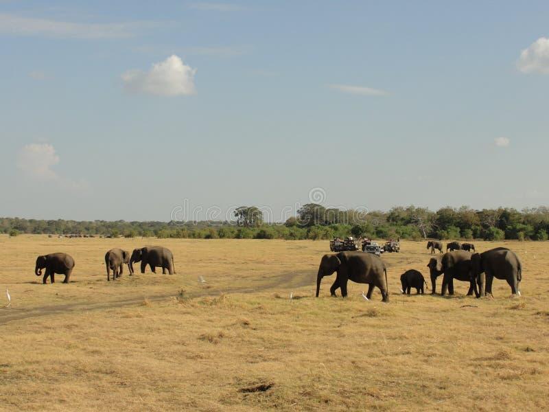 Avontuur Jeep Safari in nationaal park stock afbeelding