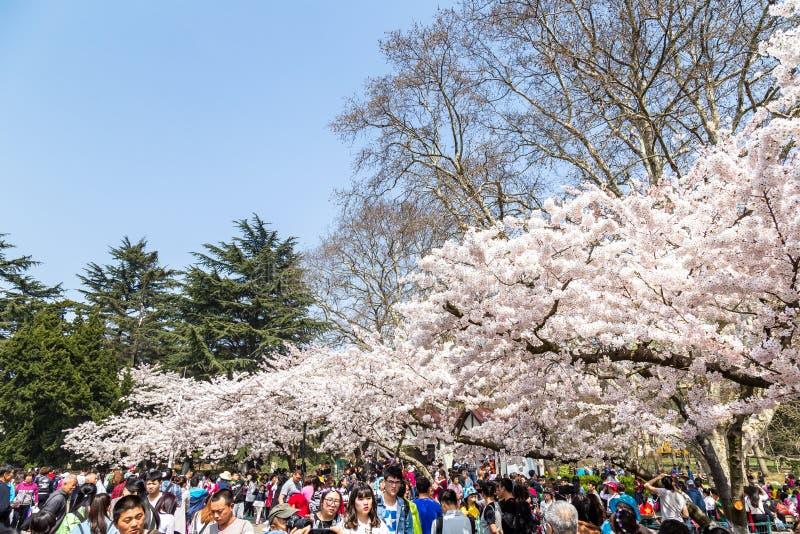 Avril 2016 - Qingdao, Chine - touristes pendant le festival de fleurs de cerisier image stock