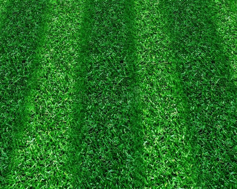 avrivet gräs royaltyfria bilder