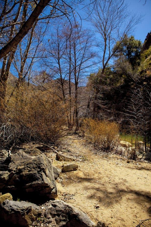 Avskild slinga till och med trees längs liten vik arkivfoto