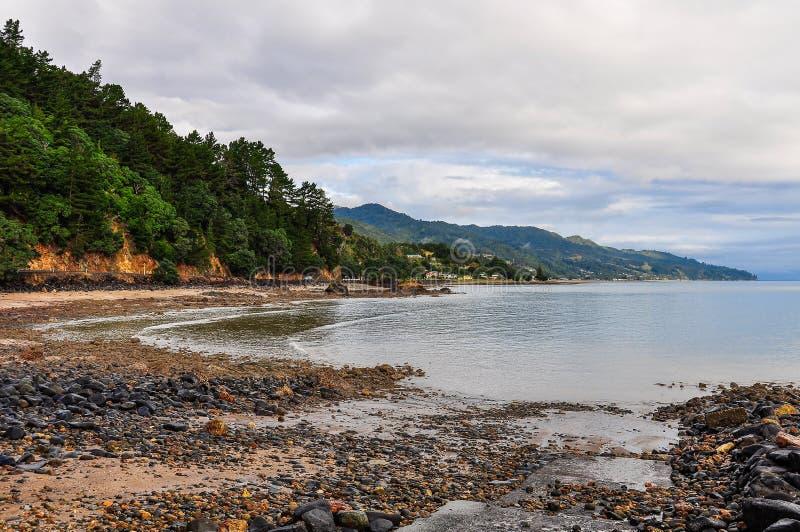 Avskild strand i den Coromandel halvön, Nya Zeeland royaltyfria bilder