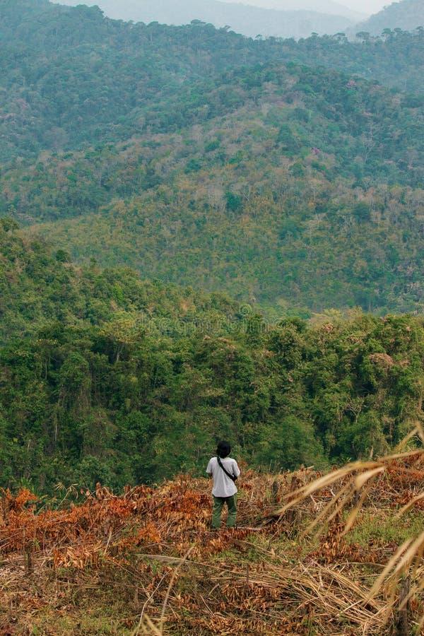 Avskogningsbegreppets image, som består av en oigenkännlig man som går bland avverkade träd i ett skogsbruk arkivfoto