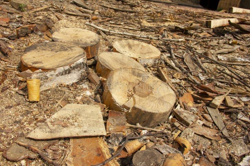 avskräde på ett sågverk Journaler som sågas i cirklar Bearbeta för skog arkivfoto
