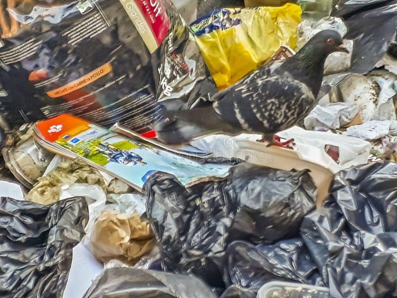 Avskräde som kastas på gatan, Montevideo, Uruguay arkivbild