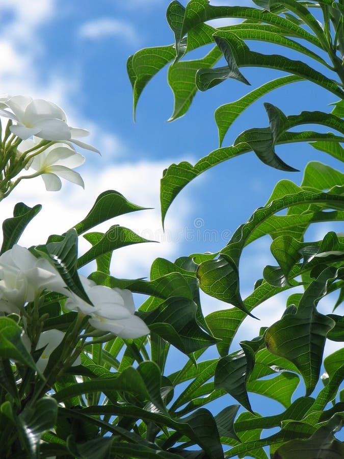 Download Avslöjande sky fotografering för bildbyråer. Bild av leaves - 993771