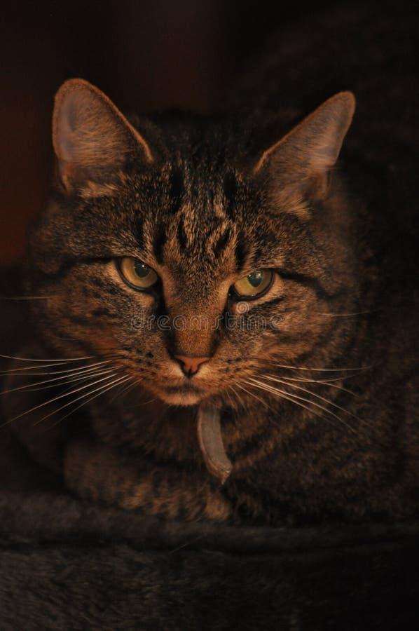 Avslappnande katt utanför arkivbilder