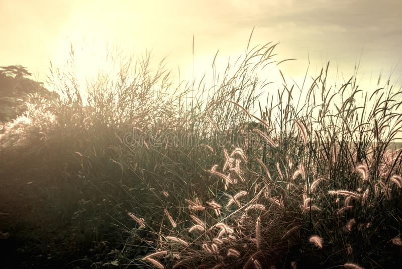 Avtorking av gräskonturn som skiner i solnedgång arkivfoton