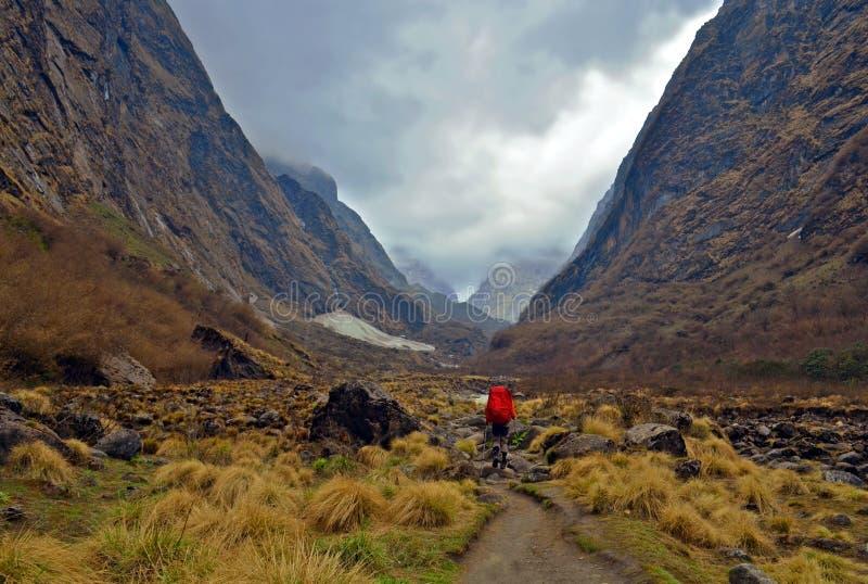 Avventura di singolo uomo del viaggiatore nel Nepal, regione di Annapurna, pista del campo base di Annapurna fotografia stock libera da diritti