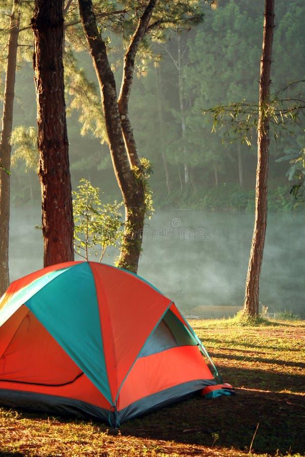 Avventura il campeggio e la tenda sotto l'abetaia, la tenda di campeggio sui prati inglesi e la laguna immagine stock libera da diritti