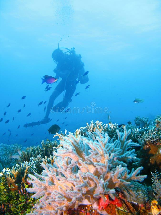Avventura tropicale di immersione con bombole fotografia stock libera da diritti