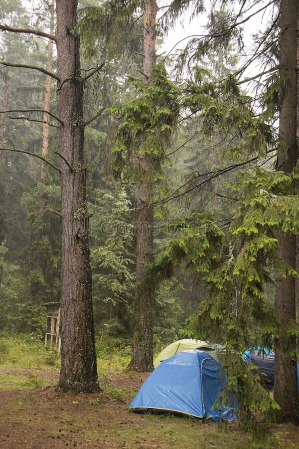 Avventure Campeggio turismo e tenda sotto la vista di un paesaggio di pino vicino all'acqua all'aperto al mattino e cielo del tra fotografie stock