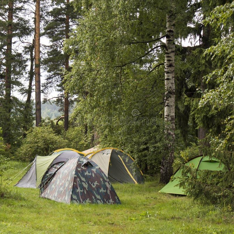 Avventure Campeggio turismo e tenda sotto la vista di un paesaggio di pino vicino all'acqua all'aperto al mattino e cielo del tra immagine stock libera da diritti