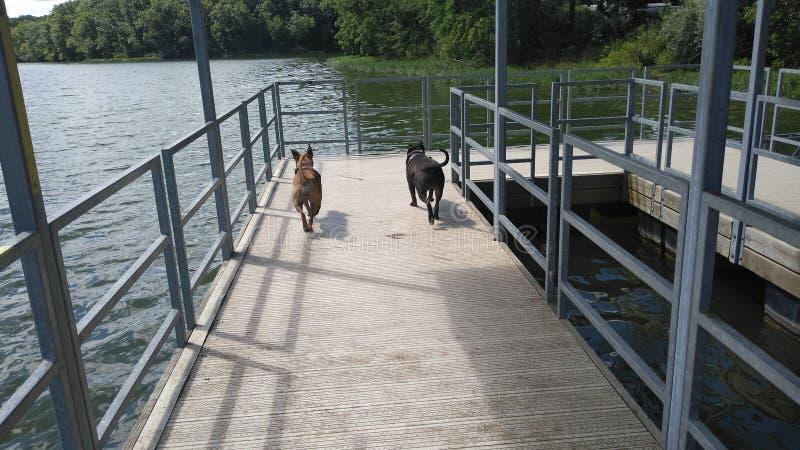 Avventure dell'animale domestico nel lago fotografia stock