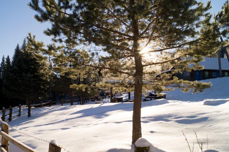 Avventure di inverno Sole di inverno carpathians l'ucraina immagine stock
