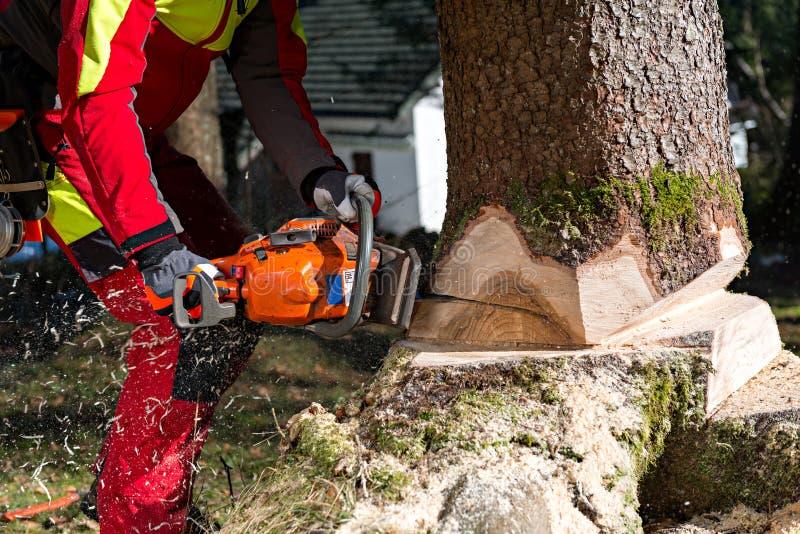 Avverka trädet arkivbild