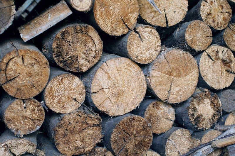 Avverkade träd, som är det synliga snittet och en-år-gamla cirklar royaltyfria foton