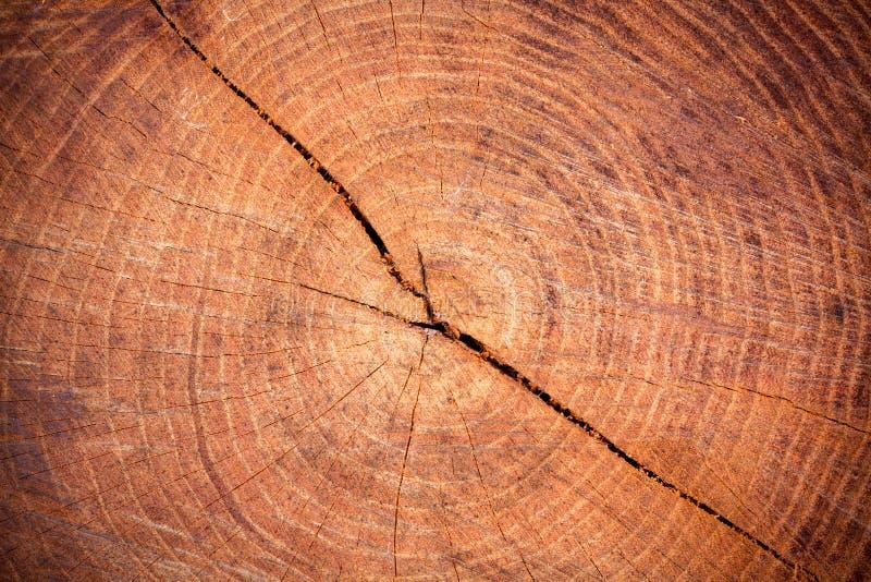 Avverkat träd royaltyfria bilder