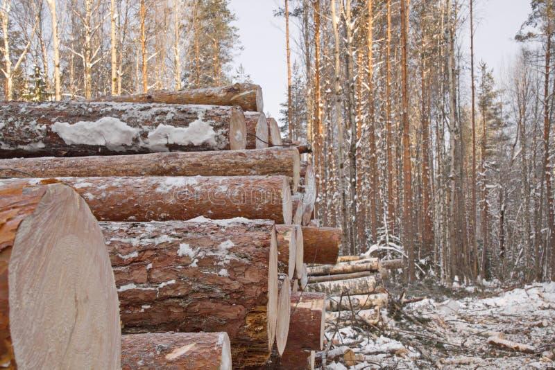 Avverkning av trä på vintern, en träskorsten på den industriella avverkningen av tomt arkivfoto