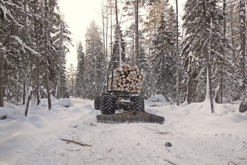 Avverkning av trä under vintern på tomten, utrustning som är lastad med träindustriell träbearbetning royaltyfri foto