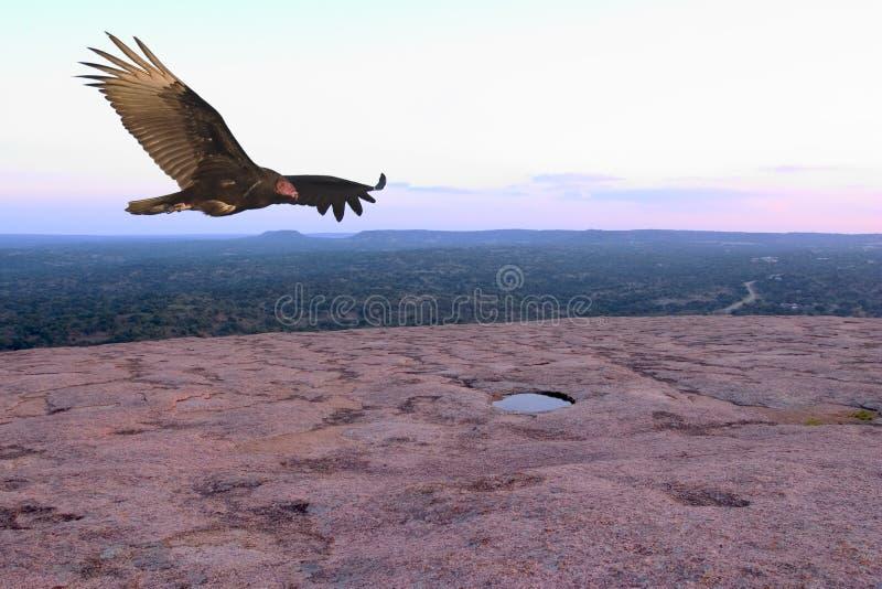 Download Avvoltoio in ascesa immagine stock. Immagine di osservare - 215369