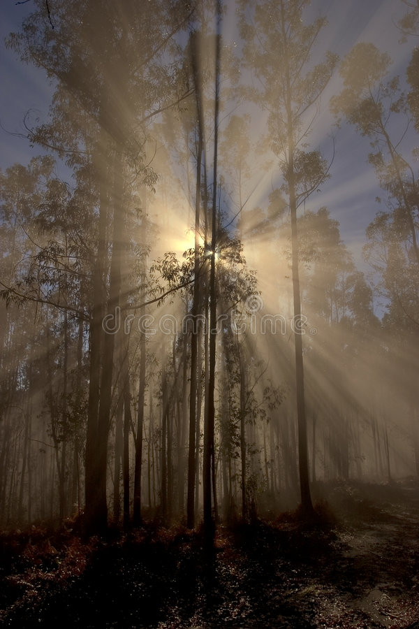 Awakening of day in the forest stock image