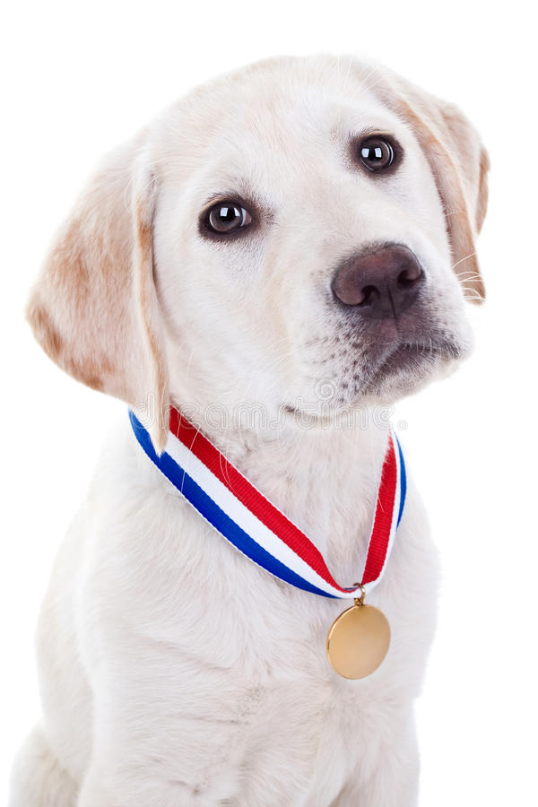 Award Winner Dog stock photo