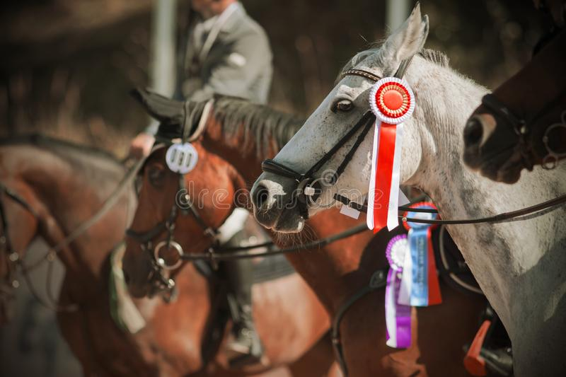 Awarding the winners of equestrian competitions in the equestrian ranks stock photography