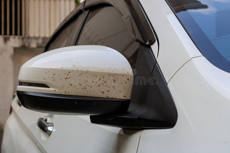 Awaryjny samochodowy colour przy skrzydłowym lustrem od krwionośnego insekta gdy jadący zdjęcia stock