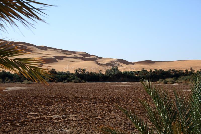 Awbari oaza zdjęcie royalty free
