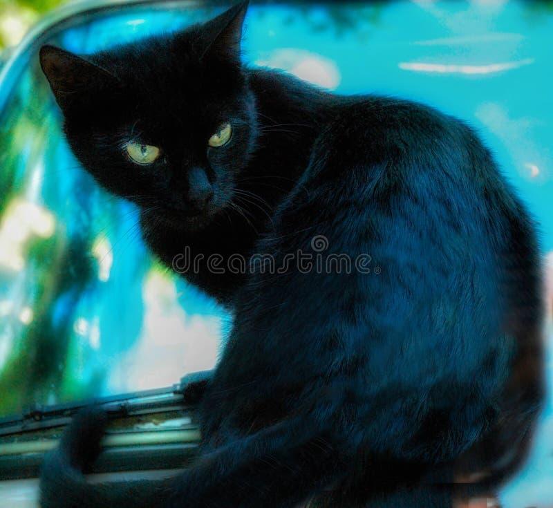 Awe kleine schwarze Katze lizenzfreies stockbild