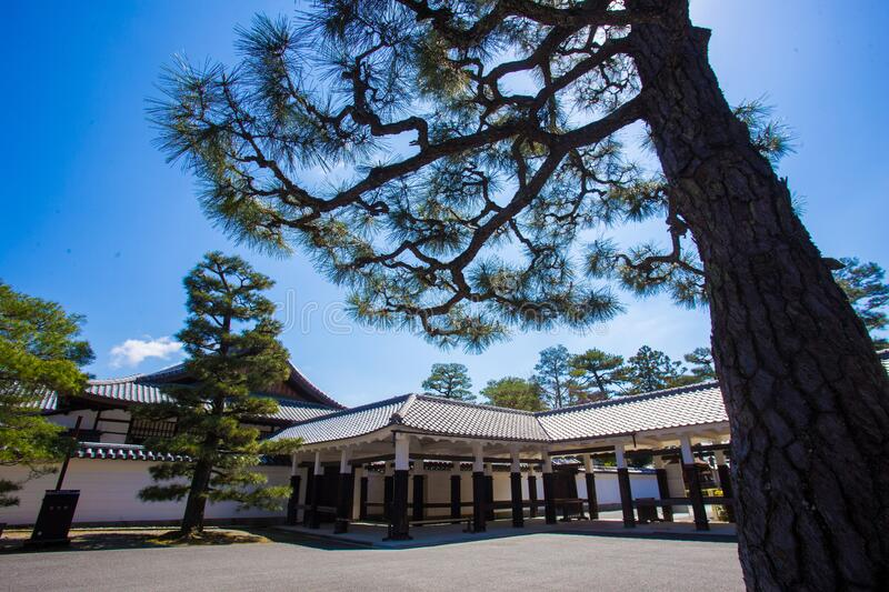 Awe  pine  and some temple near. Beautiful Sunny  day in springtime in Kyoto royalty free stock image