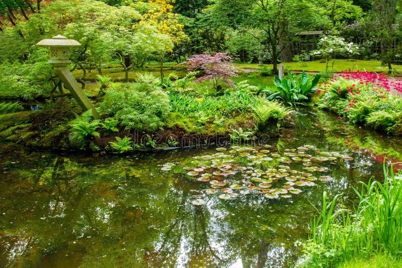 Awe scène in de japanse tuin in mei in Den Haag stock afbeeldingen