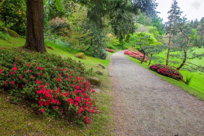 Awe scène in de japanse tuin in mei in PAys de la Loire Maulivrier, stad Frankrijk royalty-vrije stock foto