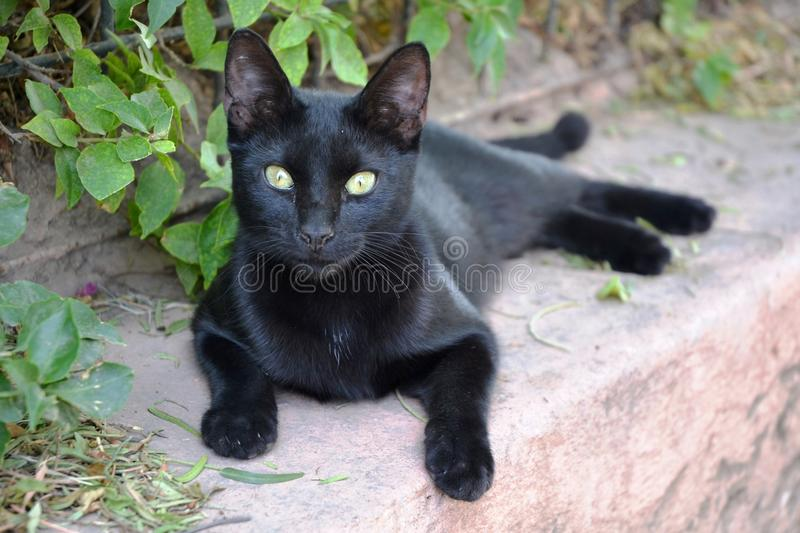 Awesome Black Street Cat royalty free stock photos