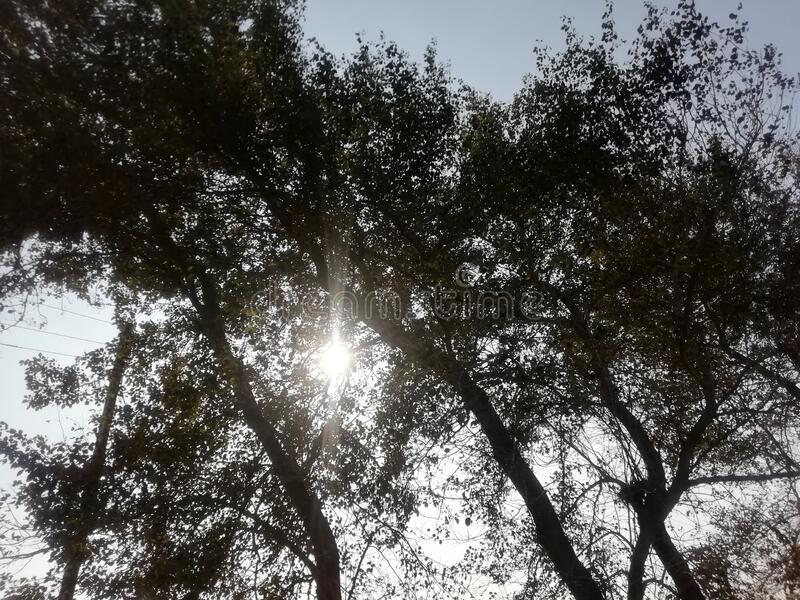 Awesome farm picture trees under the sunshine. Most . Beautiful nature and beautiful weather stock photo