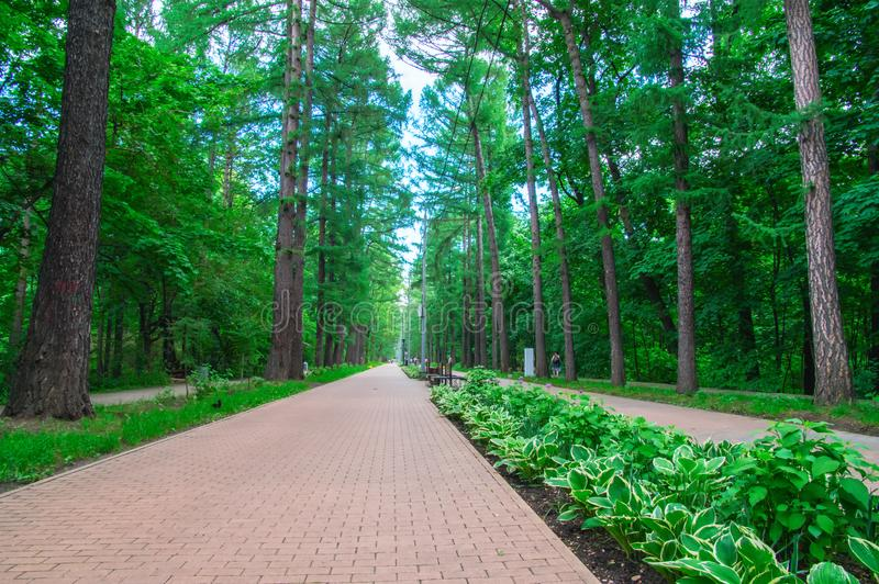 Awesome long walking alley in the summer. Cobbled road paving slabs among the dense fairy forest in the city park, perspective. Awesome long walking alley in stock photos