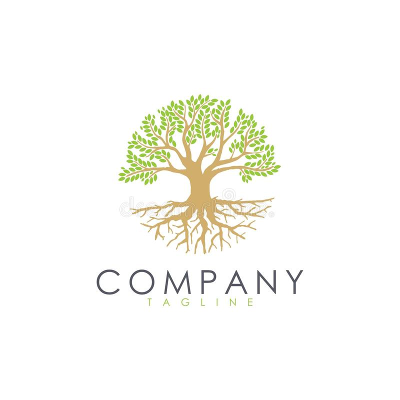 Root leaves tree logo for agriculture landscaping planting medical spa company stock illustration