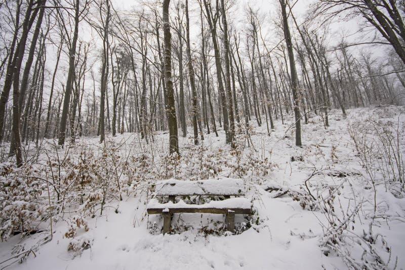 ?awka w zima lesie obraz royalty free