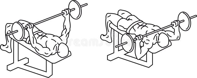 ?awki prasa Ćwiczenia i szkolenie z ciężarami royalty ilustracja