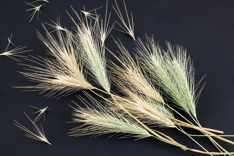 Awns on grass. Awns, a sharp grass seed with can harm the feet, ears and eyes of pet dogs and cats stock photography