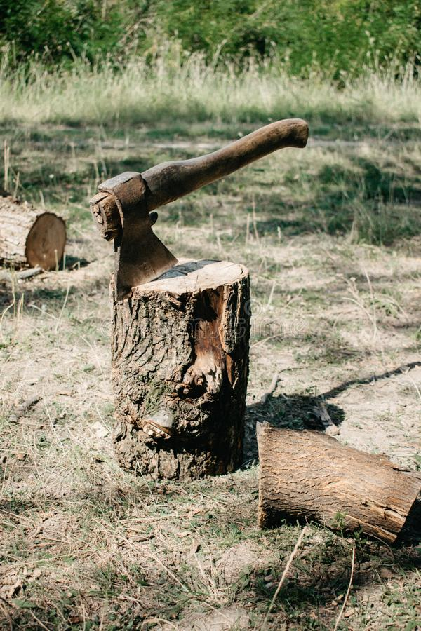 The ax is stabbed with a blade into the stump. Axe for removing tree stumps roots. Wood, greenery, hack, chop, down, cut, forest, firewood, wooden, handle royalty free stock images