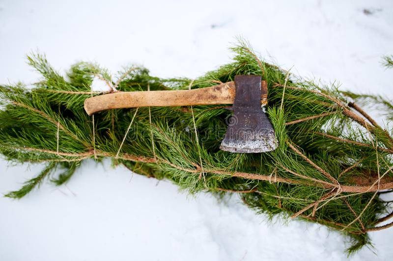 Axe on cut down spruce or pine christmas tree branches on snowy ground. Deforestation ban. Irresponsible behavior stock photo