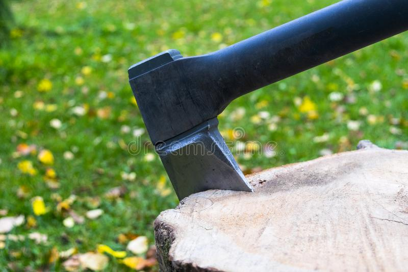 Axe in stump. Axe ready for cutting timber.Woodworking tool. Lumberjack axe in wood chopping timber. Travel adventure camping gear royalty free stock images
