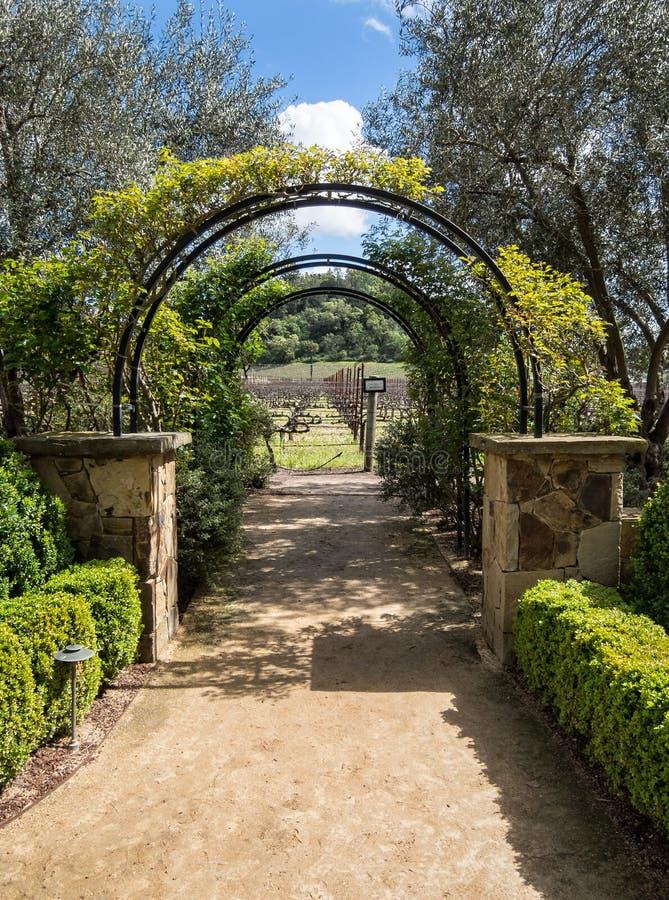 Axeln leder dig till vingårdarna royaltyfri foto